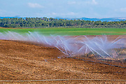 sprinklers are used to irrigate young seedlings in an Agricultural field. Photographed in Israel