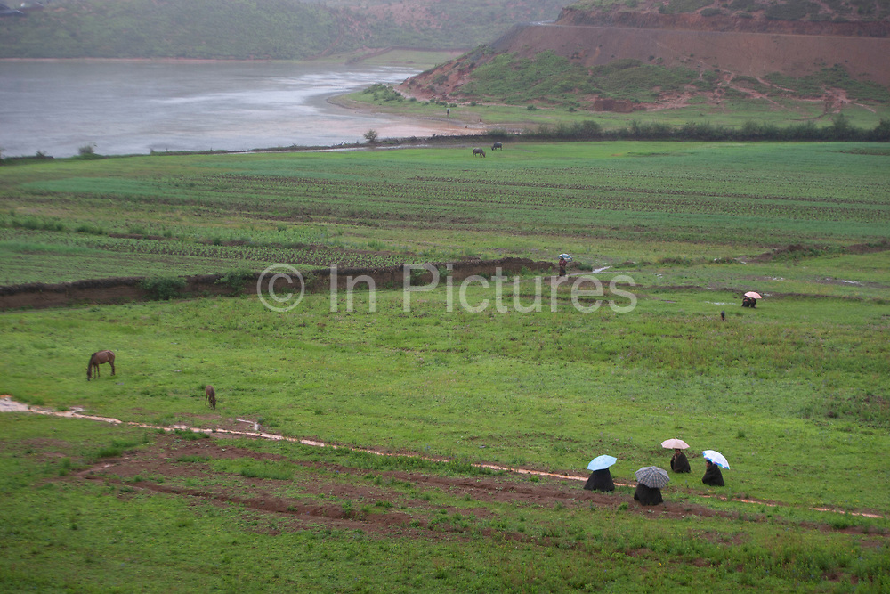 Landscape in the shadow of Shi Zi Shan, or Lion Mountain, near the small settlement of Li Ge on Lugu Lake, Yunnan, China. Crops which have to thrive in the iron rich red soil which erodes all around due to high precipitation levels. Four Mo Suo minority men huddled under umbrellas sit sheltering from the rain amongst their crops of rice, corn and potatoes.