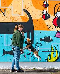 Pictured: Edinburgh Dog & Cat Home Mural Unveiling. , Edinburgh, Scotland, 03 May 2019. Beagle Barney with Vicky and Ceilidh from the rescue centre, who is looking for a good home. The 80 foot mural is unveiled today as a colourful addition to Seafield promenade. It is designed and painted by local artists Studio N_Name. It depicts the people, heritage and environment of the local community and features flora, fauna and historic elements of the local coastline. It has been made possible through through partnership with Edinburgh Shoreline Project. It is on the seafront wall of the dog & cat home which rescues, reunites and rehomes lost, stray and abandoned dogs and cats across Edinburgh and the Lothians, caring for 2,367 dogs and 771 cats in 2018.<br /> Sally Anderson | EdinburghElitemedia.co.uk