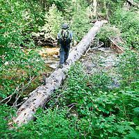 A backpacker crosses a log over Rattlesnake Creek deep in the backcountry of Montana's Rattlesnake Wilderness.