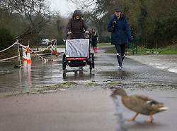 © Licensed to London News Pictures. 30/01/2021. Rickmansworth, UK. People walk through rising floodwater at a nature reserve in Rickmansworth. Days of heavy rain have lead to flood warnings for some areas in the south. Snow flurries are expected as far south as London this weekend. Photo credit: Peter Macdiarmid/LNP