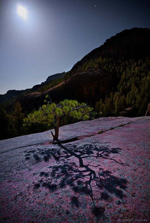 A small stunted ponderosa pine clings to life at the fringe of its survivable habitat. The pink granite surface mottled with green lichen provided a beautiful canvass for the tree's larger-than-life moon shadow, which, to me, is symbolic of its immense tenacity and spirit.