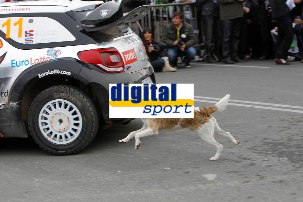 MOTORSPORT - WRC 2011 - ARGENTINA RALLY - CORDOBA 26 TO 29/05/2011 - PHOTO : FRANCOIS BAUDIN / DPPI - <br /> 11 PETTER SOLBERG (NOR) / CHRIS PATTERSON (GBR) - CITROËN DS3 WRC - PETTER SOLBERG WRT - COURSE PAR UN CHIEN JAUNE