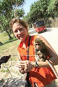 Monkey, Bentota Beach, Sri Lanka