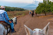 Horse back riding in the Jezreel Valley, Israel. Mount Tabor can be seen in the background