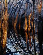 Baldcypress slough with bottomland hardwoods, Kennedy Creek near Cotton Landing, Apalachicola National Forest, Florida.