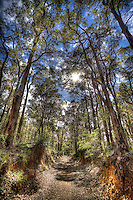 deformed land, trees, stems, leaves, sky, sunlight, grass, walkway