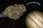Jupiter OG nug photo - the best fine art cannabis photography on the web