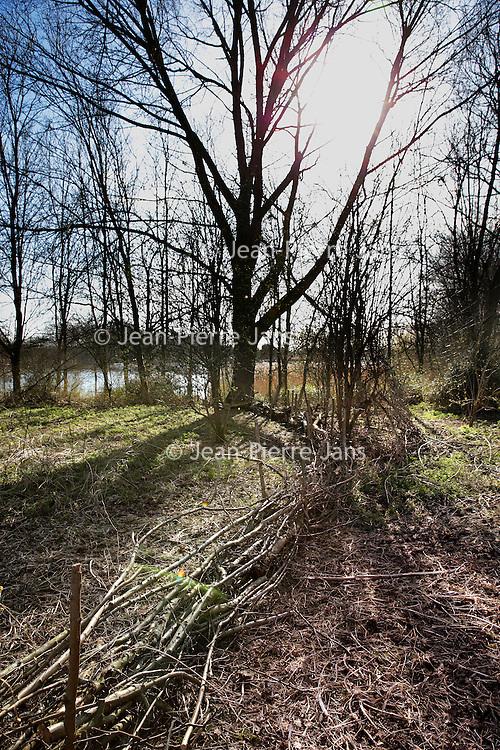 Nederland, Almere, 30 maart 2015.<br /> Rens Spanjaard initiator Weerwoud kijkt vanuit een toren op het eiland Utopia nabij Almere uit over het voedselbos.<br /> VOEDSELBOS OP UTOPIA<br /> We leggen een voedselbos aan op ons eiland. Van boom tot kruid en weer terug, alles is erop ingericht om een zo gezond en divers mogelijk bos neer te zetten dat zoveel mogelijk voedsel produceert. Wij zorgen ervoor dat je in 2022 kunt dwalen en verdwalen in een bos vol noten, appels, aardbeien en eindeloos veel ander lekkers. Om te plukken en van te genieten.<br /> Om in 2022 een voedselbos te hebben, planten we het nu al aan. Tijdens de Floriade is ons Weerwoud dan jong volwassen en vol in productie, en laat het je zien hoe een natuurlijk ecosysteem ons van voedsel kan voorzien.<br /> De Urban Greeners Rens en Koen zijn het tweespan achter het Weerwoud. Ze worden versterkt door twee voedselbosexperts van Food Forestry Nederland: Wouter Eck en Xavier San Giorgi. Ook zijn er studenten van CAH Vilentum die meedenken en helpen om er een leefbaar bos van te maken, door bijvoorbeeld onderzoek te doen.<br /> Op de foto: Een houten dammuur in het voedselbos van Utopia.<br /> Foto:Jean-Pierre Jans