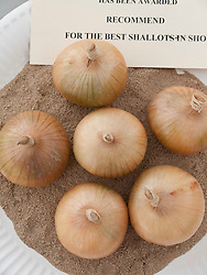 Prizewinning shallots in produce show at Whitemoor Allotments, Nottingham , England