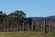 The Megalong Creek Estate, Blue Mountains Winery, Megalong Valley, NSW, Australia.