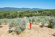 Exploring the fields of olive trees at the olive oil estate and producer Bastide du Laval in Cadanet, France.