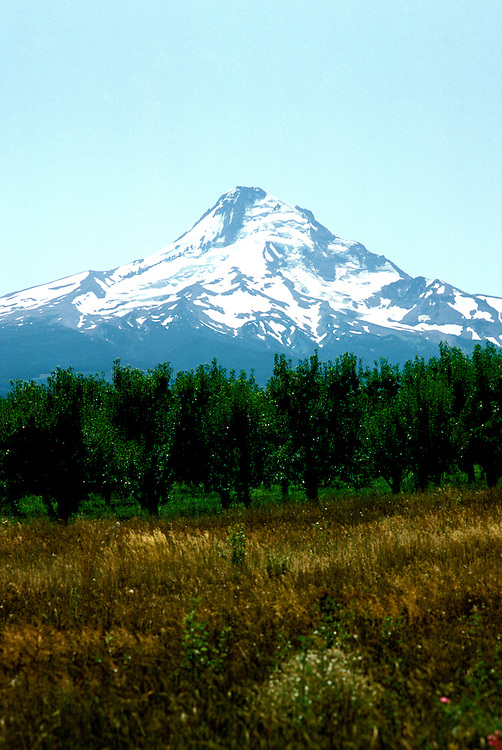 Oregon: Mt. Hood, orchards, Photo: orhood104  .Photo copyright Lee Foster, www.fostertravel.com, 510/549-2202, lee@fostertravel.com
