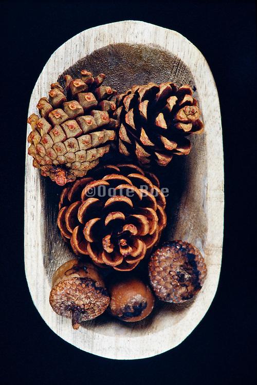 Pinecones and acorns
