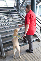 Vision impaired man and guide dog prepare to climb some steps,