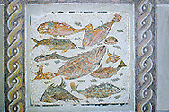 Roman  floor mosaic depicting fish  from  a room of a villa  in the locality Baccano near the Via Cassia, Rome. end of 2nd and beginning of the 3rd century AD. National Roman Museum, Rome, Italy .<br /> <br /> If you prefer to buy from our ALAMY PHOTO LIBRARY  Collection visit : https://www.alamy.com/portfolio/paul-williams-funkystock/national-roman-museum-rome-mosaic.html <br /> <br /> Visit our ROMAN ART & HISTORIC SITES PHOTO COLLECTIONS for more photos to download or buy as wall art prints https://funkystock.photoshelter.com/gallery-collection/The-Romans-Art-Artefacts-Antiquities-Historic-Sites-Pictures-Images/C0000r2uLJJo9_s0