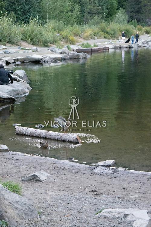 Trillium Lake, Oregon.
