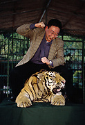 Chained Tiger used to pose for Tourist Photographs<br />