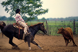 man on a horse roping a calf