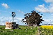 Windmill in paddock next to flowering canola crop in rural Mingay, Victoria, Australia. <br /> <br /> Editions:- Open Edition Print / Stock Image