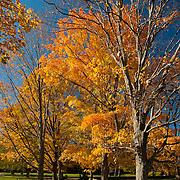 Fall colors at Appleton Farms, Ipswich, MA
