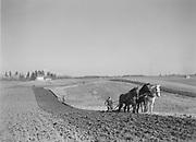 9969-2378. Spring plowing on the farm of Frank Spada. April 11, 1936. Spada farms were at 180th & Marine Drive