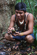 Surui indians using GPS geolocalisation inside Surui territory primary rainforest interior.<br /><br />An Amazonian tribal chief Almir Narayamogo, leader of 1350 Surui Indians in Rondônia, near Cacaol, Brazil, with a $100,000 bounty on his head, is fighting for the survival of his people and their forest, and using the world's modern hi-tech tools; computers, smartphones, Google Earth and digital forestry surveillance. So far their fight has been very effective, leading to a most promising and novel result. In 2013, Almir Narayamogo, led his people to be the first and unique indigenous tribe in the world to manage their own REDD+ carbon project and sell carbon credits to the industrial world. By marketing the CO2 capacity of 250 000 hectares of their virgin forest, the forty year old Surui, has ensured the preservation, as well as a future of his community. <br /><br />In 2009, the four clans and 25 Surui villages voted in favour of a total moratorium on logging and the carbon credits project. <br /><br />They still face deforestation problems, such as illegal logging, and gold mining which causes pollution of their river systems