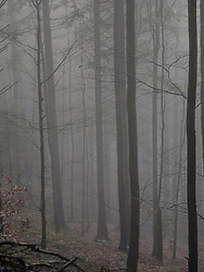 Silhouette of trees during fog in Black Forest, Baden-Wurttemberg, Germany