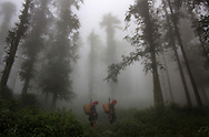 Two Red Dao women trek through the fog shrouded forest from their village to a nearby market near Sapa, Vietnam. The women, dressed in tribal costumes, are carrying baskets of homemade goods and umbrellas. Robert Dodge, a Washington DC photographer and writer, has been working on his Vietnam 40 Years Later project since 2005. The project has taken him throughout Vietnam, including Hanoi, Ho Chi Minh City (Saigon), Nha Trang, Mue Nie, Phan Thiet, the Mekong, Sapa, Ninh Binh and the Perfume Pagoda. His images capture scenes and people from women in conical hats planting rice along the Red River in the north to men and women working in the floating markets on the Mekong River and its tributaries. Robert's project also captures the traditions of ancient Asia in the rural markets, Buddhist Monasteries and the celebrations around Tet, the Lunar New Year. Also to be found are images of the emerging modern Vietnam, such as young people eating and drinking and embracing the fashions and music of the west. His book. Vietnam 40 Years Later, was published March 2014 by Damiani Editore of Italy.