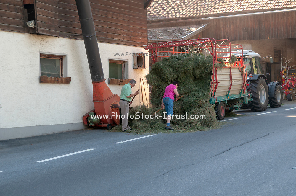 Farmers store fodder in a barn at Imst, a town in the Austrian federal state of Tyrol. It lies on the River Inn in western Tyrol,