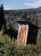 """Horse (""""Shorty"""") patiently waiting for his rider by outhouse at King's Cabin, Caribou Creek, Talkeetna Mountains, Alaska."""