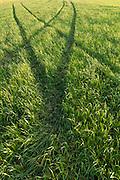 Summer grass tracks