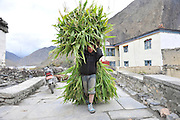 Asia, Nepal, Young bot carries the harvest back from the field