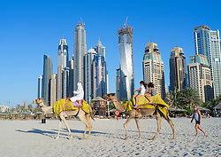 Camels on beach at Jumeirah with new high-rise buildings in New Dubai in United Arab Emirates