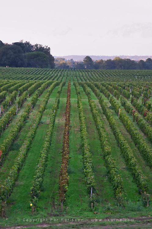 Vineyard. Chateau Smith Haut Lafitte, Pessac Leognan, Graves, Bordeaux, France