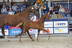 064 - Jacarusa H<br /> Merrieveulens springen<br /> KWPN Paardendagen - Ermelo 2014<br /> © Hippo Foto - Leanjo de Koster