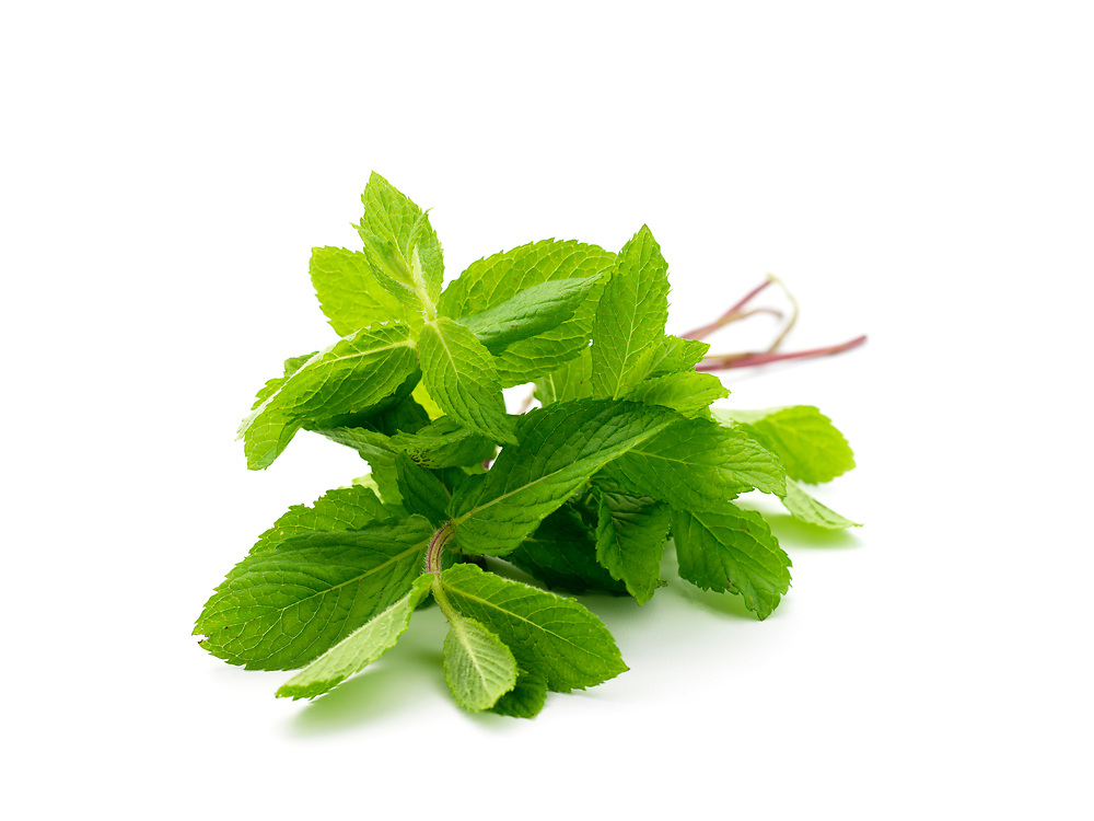 SC_ 1098 Bunch of fresh mint leaves on a white background