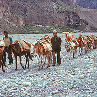 A Thakali horse caravan returns after delivering rice and other goods through the Kali Gandaki gorge, a salt trade route with Tibet.