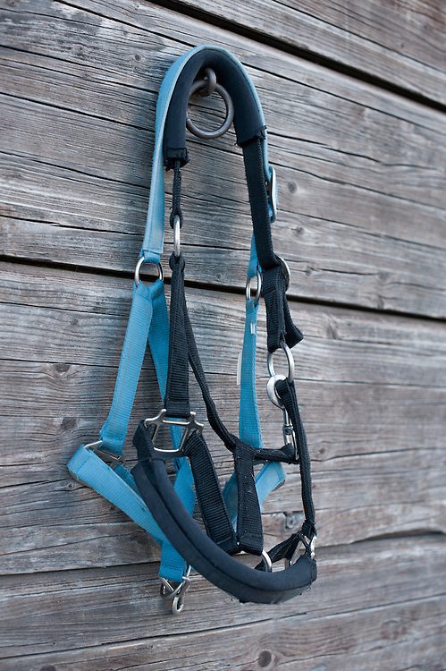Close-up of horse harnesses hanging on wooden wall in barn, Bavaria, Germany