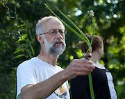 Allium cepa var. proliferum. Luftløk.