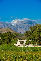 Vineyards, Allee Bleue  Wine Estate, Groot Drakenstein, Cape Winelands, near Cape Town, South Africa.