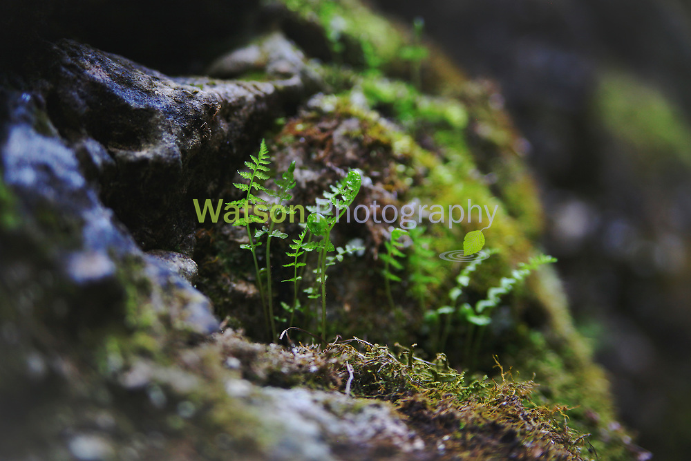Ferns of the Jungle