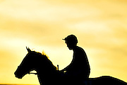 A horse and rider are silhouetted against the setting sun before a jump race at Cheltenham race course on November 13, 2010.