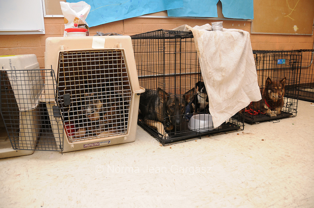 Pets displaced by the Monument Fire near Sierra Vista, Arizona, USA, are crated at Apache Middle School, where they and their people are being sheltered after evacuation.