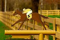 Race horse mailbox, Lexington, Kentucky USA