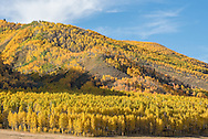 Fall color in the Castle Creek Valley near Aspen, Colorado.