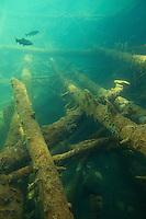 Rainbow trout (Oncorhynchus mykiss)<br /> In mountain lake, Berner Oberland, Swiss Alps, Switzerland<br /> Regenbogenforelle (Oncorhynchus mykiss)<br /> In Bergsee des Berner Oberlandes, Berner Alpen, Schweiz<br /> Truite arc-en-ciel (Oncorhynchus mykiss)<br /> Dans lac de montagne de l'Oberland Bernois, Alpes Suisses, Suisse<br /> 07-04-2009