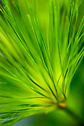 A look deep into a green needle plant.