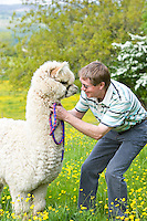 farmer with an alpaca stood in field of buttercups