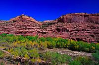 Trees line the Escalante River, near Escalante, Utah USA